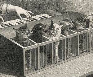 cat, piano, and idea image