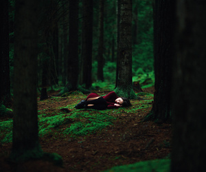 forest, alone, and nature image