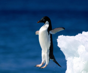 penguin, animal, and bird image