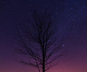 tree, stars, and photography image