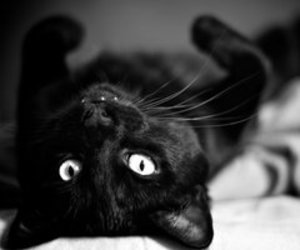 beautiful, black and white, and black cat image