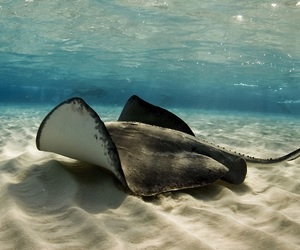 beach and sting ray image
