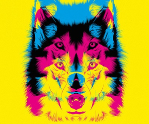wolf, yellow, and animal image