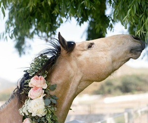 horse, flowers, and animal image