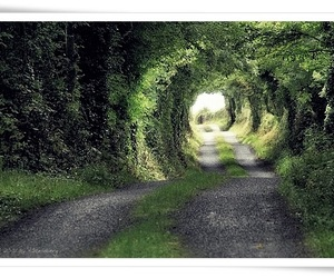 green, nature, and road image