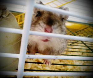 animal, hamster, and rawr image