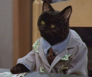 cat, funny, and money image