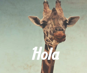 hola, giraffe, and animal image