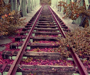 pink, flowers, and train image