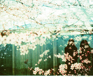 flowers, photography, and sakura image