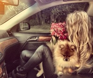 blonde, dog, and flowers image