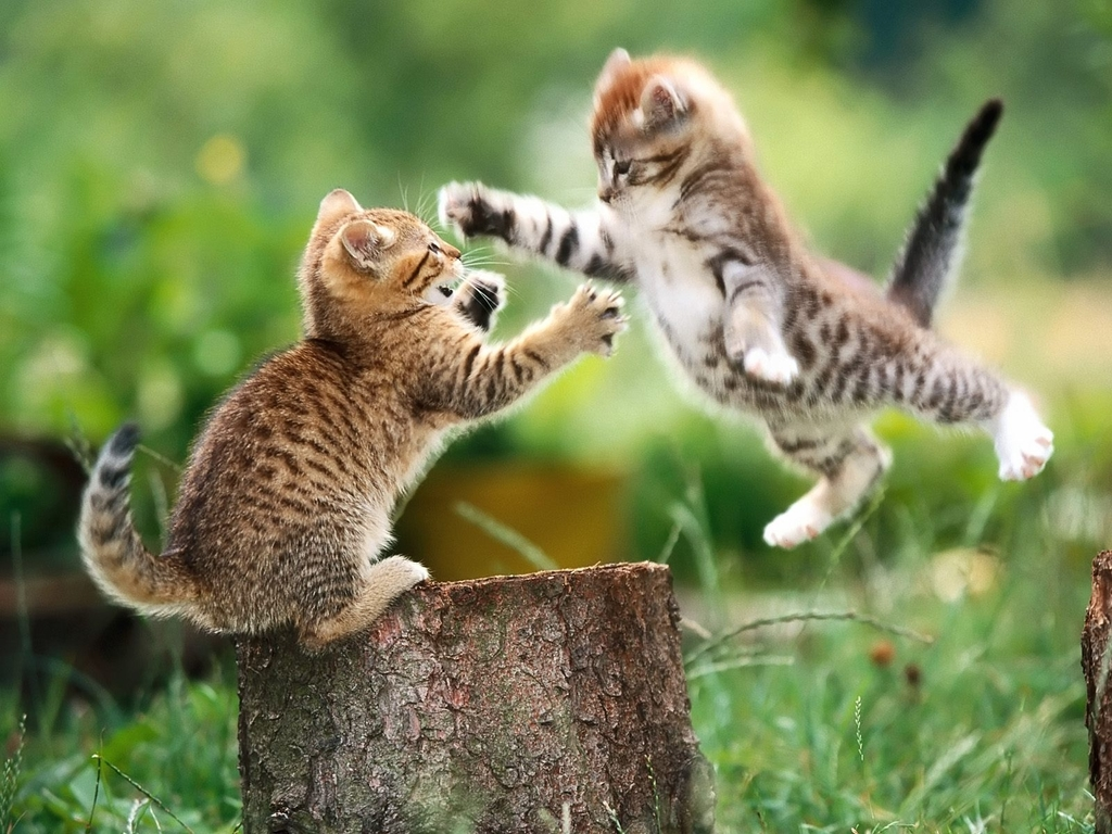 cat, beautiful cat, and fighting cat image