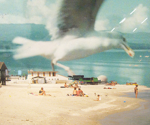 beach, close up, and Flying image
