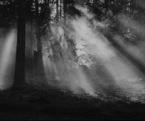 black, sunlight, and fog image