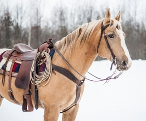 horse, western, and winter image