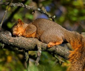 squirrel, animal, and sleeping image