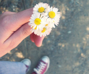 converse, love, and daisy image