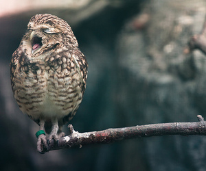 lovely, owl, and cute image