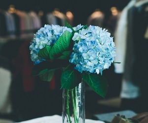 blue, flowers, and favorite image