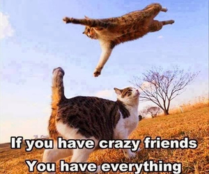friends, cat, and crazy image