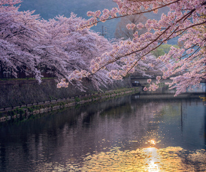 japan, tree, and water image