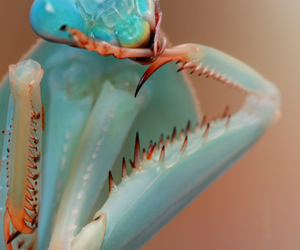 animal, blue, and insect image