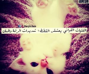 cat and عربي image