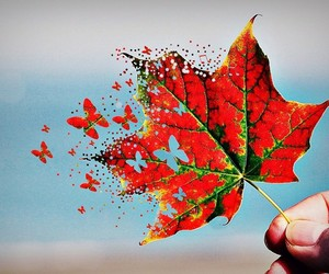 butterfly, autumn, and leaves image