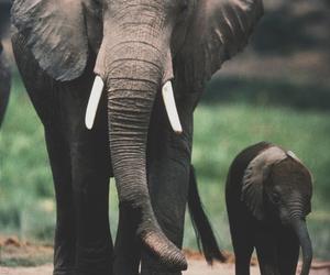 elephant, vintage, and indie image