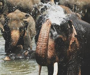 elephant, water, and nature image