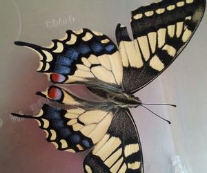 beautiful, love it, and butterfly image