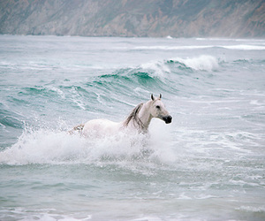 horse and sea image