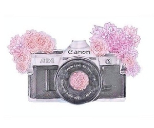 flowers, canon, and camera image