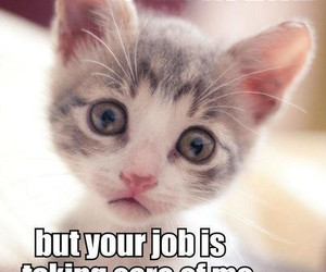 39 images about funny cat meme on we heart it see more about cat