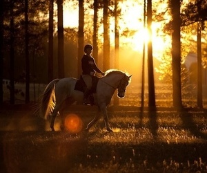 horse and sunset image