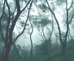 tree, forest, and foggy image