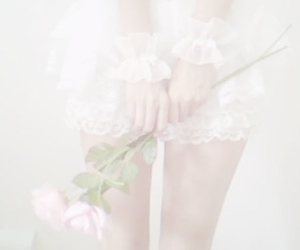pale, rose, and white image