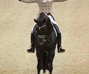 dressage, stallion, and horse image