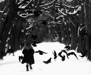 bird, ravens, and white image