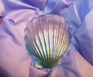 lovely, shell, and shiny image