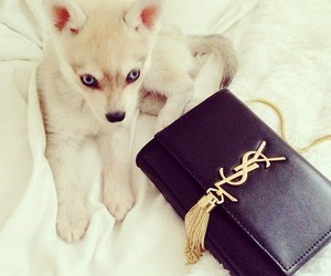 dog, cute, and YSL image