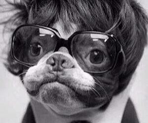 dog, wig, and glasses image
