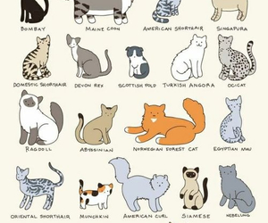 cat, animal, and pet image