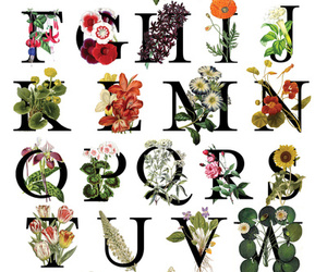alphabet, art, and art print image