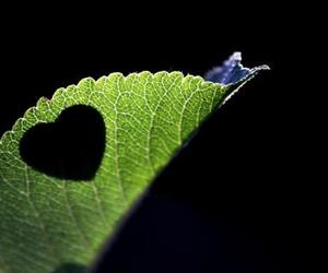 love, hearts, and nature image
