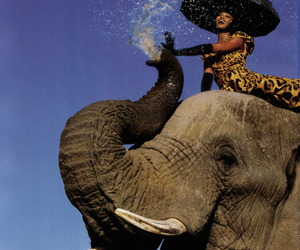 elephant, fashion, and model image