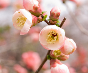 amazing, pretty, and spring image
