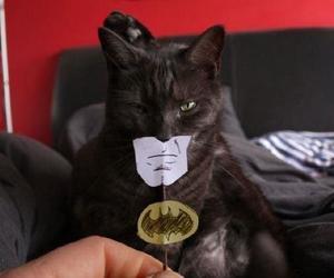 batman, cat, and pisica image