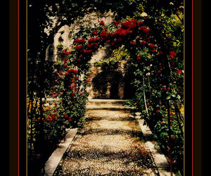 Alhambra, red rose, and abigfave image