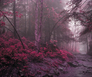 forest, nature, and pink image